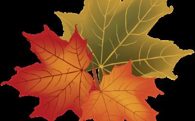 Gesundheitserklärung Schüler zur Vorlage nach den Herbstferien
